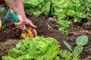 featured image - 8 Top Gardening Tips for Beginners