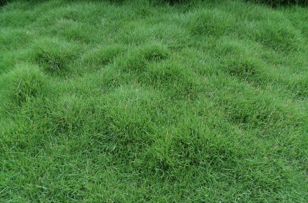 How to Lay Bermuda Grass Sod