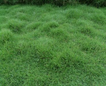 featured image - How to Lay Bermuda Grass Sod